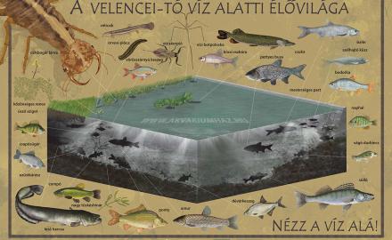 A Velencei-tó víz alatti élővilága